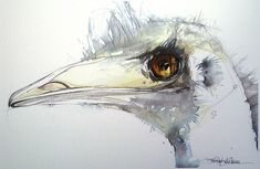 portrait of an emu by Jennifer Kraska, via Flickr
