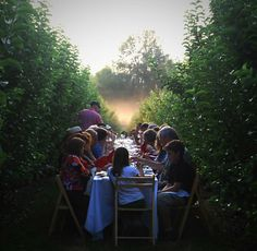 Summer party- after a hot day an evening dinner with family and friends, be great in a vineyard