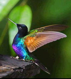 Colores muy frescos uno de mis pájaros favoritos