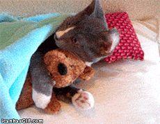 funny-gif-cat-hugging-stuffed-bear