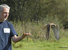 Soutenez les centres de soins de la faune sauvage Volée de piafs et de la LPO Aquitaine