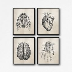 "Set of Four Art Prints - 8X10"" or 11X14"" - Vintage Anatomy - Tan brown neutral - Office decor - Medical student - Dorm room - SKU:807"