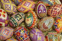 Navy Bean: Ukrainian Eggs