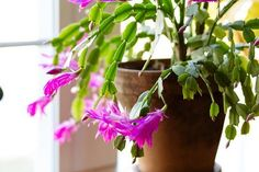 Indoor House Plants - Winter Care http://www.coolgarden.me/indoor-house-plant-winter-care-1683/