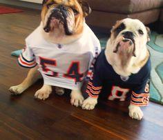 My future: dressing up my bulldoggies