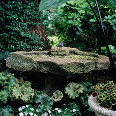 The Fosters were able to salvage a lot of granite for their landscape -- so it's only natural to use it for garden accents. Here, an old granite slab creates another birdbath. Test Garden Tip: This is a perfect way to attract birds to your garden. They love water -- and they also love having trees or shrubs to dart into if something scares them. Be sure to provide cover for them to feel safe if you want birds in your yard.