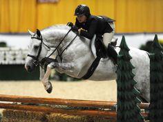 perfect grey jumping timber