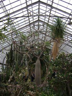 Desert House - Garfield Park Conservatory