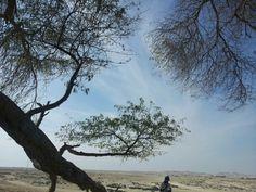 "Bahrain ""Tree of life"""