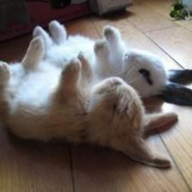 Shhhhhh .. we're playing dead, quiet, don't move.