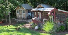 Chicken Coop Bedding: SAND, the Litter Superstar!
