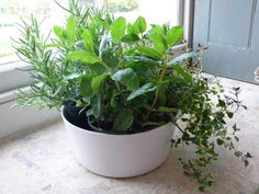 A mini herb garden on the window sill. The shapes and textures are enhanced by gathering several small pots in a very simple ceramic dish.  [great website with keeping your herbs through winter]