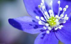 fikir Hd Flower Wallpaper Pinterestte Güller Mavi ×