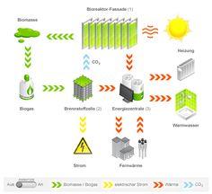 produccion de energia algas