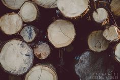 LOGS photography print, cozy winter landscape, 8x12