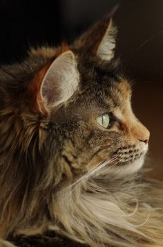 lizzy, via Flickr.