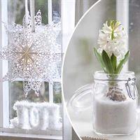 Hyacinter: Så gör du finaste dekorationen i vinter | Leva & bo