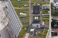 3,900 m2 de horta urbana criada na cobertura de um edifício em New York.