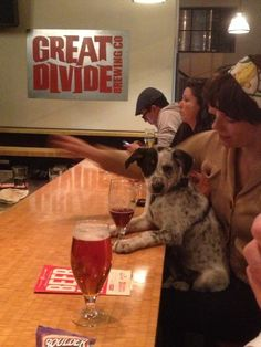 Great Divide Brewery, Denver, CO.  Brewery dog picture from a friend.