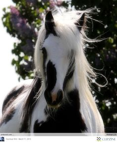 I want a horse like this. It would match my cats.   ...........click here to find out more     http://googydog.com