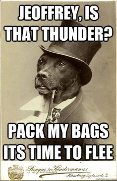 Old Money Dog Meme... I can't get enough of this...
