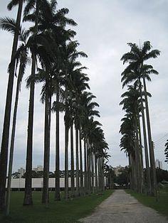 Parque Roberto Burle Marx. #Brasil #Brazil