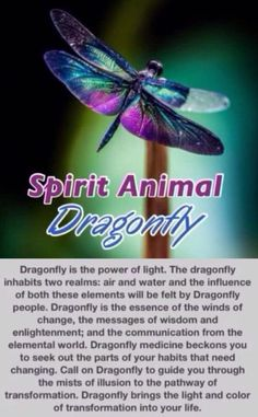 Information on Dragonfly as spirit animal guide= i remember. The dragonfly.