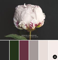 a peony-inspired color palette // slate gray, deep emerald green, sangria, taupe gray, blush pink petal