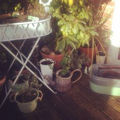 Garden x