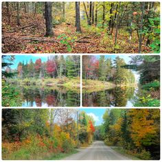 TWO BEAUTIFUL BUILDING LOTS LOCATED ON THE YORK RIVER IN BANCROFT ONTARIO Two separate building lots each under an acre, located on the York River just 10 minutes from the town of Bancroft in Ontario.