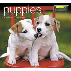 Puppies Wall Calendar: Undeniable puppy love! Cuddly, roly-poly, and endearingly needy, puppies are expert attention-getters that few can resist. Give in to their charm the whole year through with this calendar featuring full-color photos of America's favorite pets.  $13.99  http://calendars.com/Puppies/Puppies-2013-Wall-Calendar/prod201300005317/?categoryId=cat00339=cat00339#