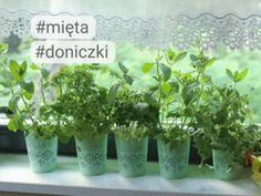 Placki z dyni - przepis składniki i przygotowanie - Desery - Polki.pl Herbs, Plants, Herb, Planters, Plant, Spice, Planting