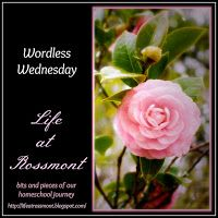 Life at Rossmont: Wordless Wednesday, April 18 {with link up}