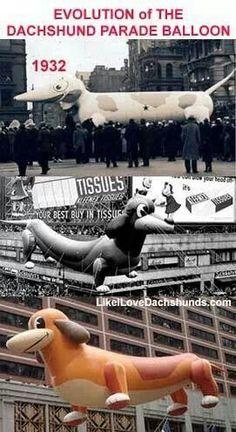 Evolution of the #dachshund parade balloon #dashchunds