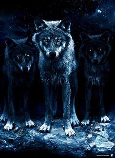 Wolves by aidystudio, via Flickr
