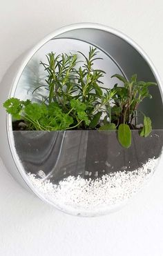 Make An Indoor Herb Planter In 10 Minutes! is part of Upcycled Crafts Garden Indoor Herbs - Baking tin herb planter repurpose some of your old baking tins and make this indoor herb planter for your kitchen You can do it in 10 mins! Indoor Vegetable Gardening, Hydroponic Gardening, Container Gardening, Organic Gardening, Diy Herb Garden, Garden Ideas, Herbs Garden, Culture D'herbes, Vertical Herb Gardens
