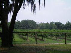 Deep Water Vineyard