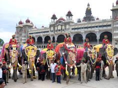 Traditional welcome for Dasara elephants at Mysore Palace. The first batch of Dasara elephants including Arjuna, Balarama, Abhimanu, Vijaya, Cauvery, Gajendra were welcomed at Jayamarthanda Gate of Mysore Palace Chamundi temple chief priest along with Palace temple priests chanted hymns and offered puja to Dasara elephants.