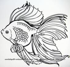 fish line drawing - Google Search