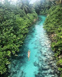 #frenchpolynesia  : Devon Windsor  #dreamland #dreamy #dreamyplace #dreamyphoto #pictures #beautifulpicture #beautifulplaces #beautifulphoto #photography #photographer #travel #travelphotography #travellovers #trip #journey #advanture #advantures #river #rivet #tree #arbre #voyage #vacation #vacations