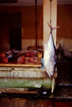 Fish market in Marsala.Photo taken by Franco Dall'Agata