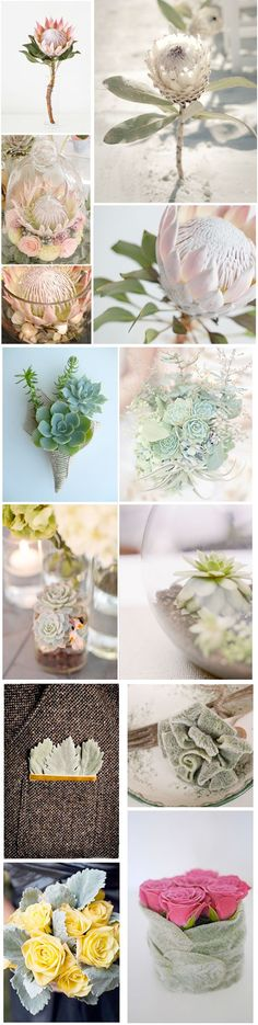 Top 3 Wedding Flower Trends of 2013: The Protea, succlents and Lamb's Ear {via Weddingstar blog}