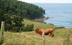 Oyambre. Cantabria.