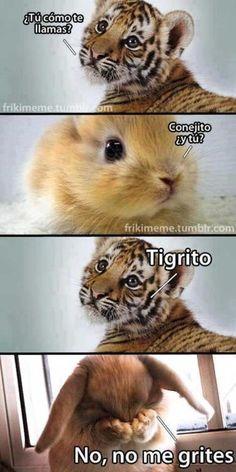 Conejo y tigre