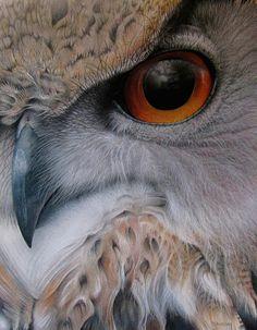 Eurasian Eagle Owl by Martin Aveling