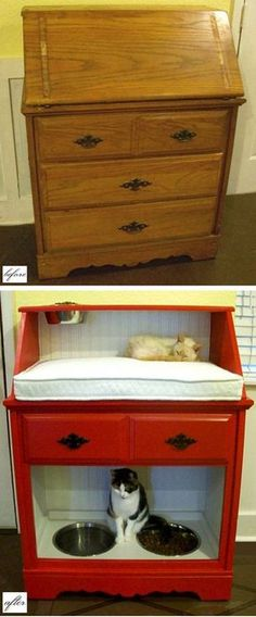 Interesting Projects For Your Pets- Cats And Dogs