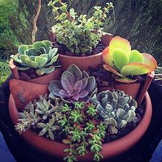 Tiered succulent container garden. Use your broken terra cotta pots to give the separated but united look. Just make sure to plant an odd number of plants (notice how there are 7 types). container gardening, succulent, summer gardening, patio
