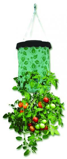 Tomatera urbana por 9.90€ en Planeta Huerto Recipiente 40x22cm creado especialmente para el cultivo de tomates en espacios pequeños como balcones, terrazas o patios. Utilizando la gravedad como tutor natural, podremos cultivar tomates orgánicos, jugosos y económicos en cualquier lugar. Sólo recipiente, el producto no contiene plantel, tierra ni abono. Cultiva tomates en tres pasos: pon el plantel por debajo; pon la tierra en la bolsa y riega por arriba. Compost, Biscuit, Plant Design, Herb Garden, Bird Feeders, Plant Hanger, Planter Pots, Backyard, Outdoor Decor