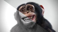 Making of Goodyear Chimpanzee