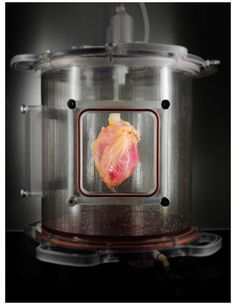 Scientists Grow Full-Sized, Beating Human Hearts From Stem Cells | Popular Science